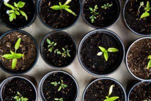 Gelderziehung Gemüse planzen
